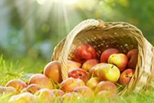 食品和农产品